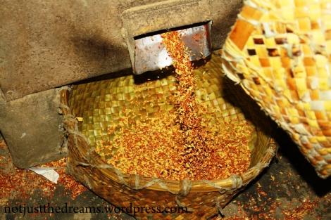 Tak wygląda oczyszczanie ryżu. Ziarna wsypywane są kilkukrotnie do maszyny, aż z czerwonych staną się w 100% białe.