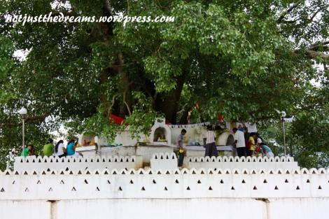Bodhi Tree w jednym z dewali. Wierni składają dary przy drzewie. Na dole były kraniki, z których nalewana była woda, zanoszona później do drzewa w darach.