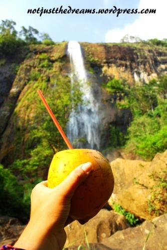Król napojów jest jednak na Sri Lance jeden. King Coconut to bomba witaminowa, która idealnie gasi pragnienie i... leczy kaca.