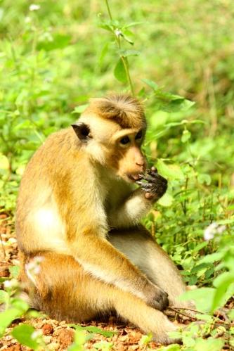 Poznałyśmy też Małpkę Testerkę...