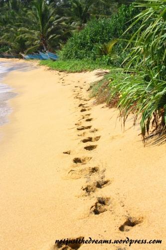 Tak mniej więcej prezentowały się moje marzenia o rajskiej plaży ;)