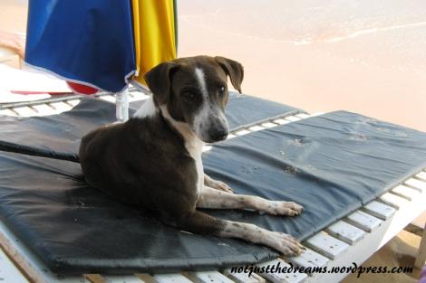 Jak na całej Sri Lance, także i tutaj bezdomne psy były bardzo przyjazne i szukające miłości. Ten przez kilka dni bawił się z tymi samymi turystami, nie trzeba go też było zachęcać do położenia się obok, wystarczyło machnięcie ręką wykonane z zupełnie innego powodu.