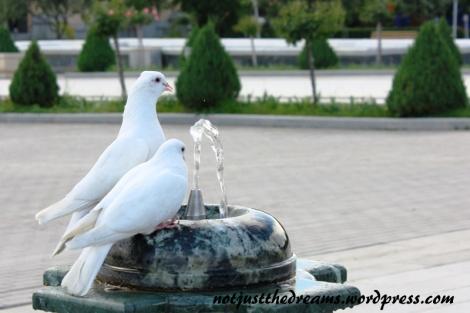 """Spotkane gołębie, tak jak i Ewa po pierwszej próbie, zdecydowanie wolą """"kranówę"""" - bez gazu i barwników (nawet naturalnych)"""