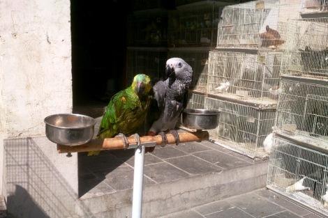 Gadającą papugę?